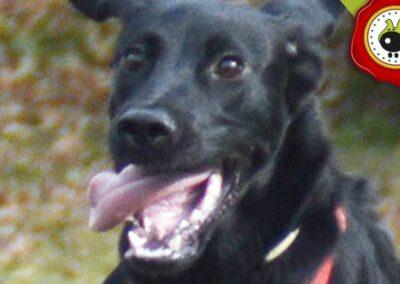 Nora, graduado curso de obediencia canina básica  en Escuela Canina La Tejera