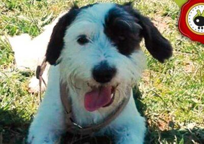 Reina, graduado curso de obediencia básica canina intensivo en Escuela Canina La Tejera