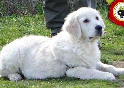 Sammy, graduado curso de obediencia canina básica  en Escuela Canina La Tejera