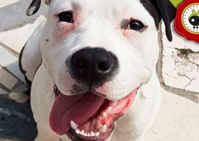 Tarao, graduado curso de obediencia básica canina intensivo en Escuela Canina La Tejera