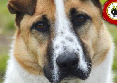 Truman, graduado curso de obediencia canina básica  en Escuela Canina La Tejera