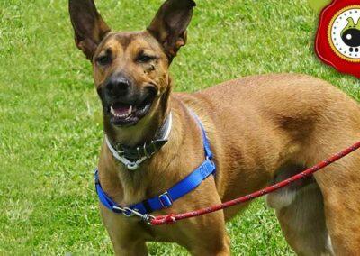 Zuhaitz, graduado curso de obediencia canina básica  en Escuela Canina La Tejera