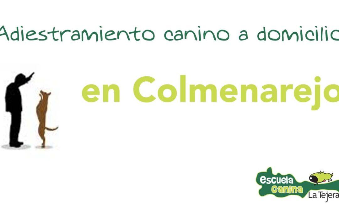 Escuela canina en Colmenarejo