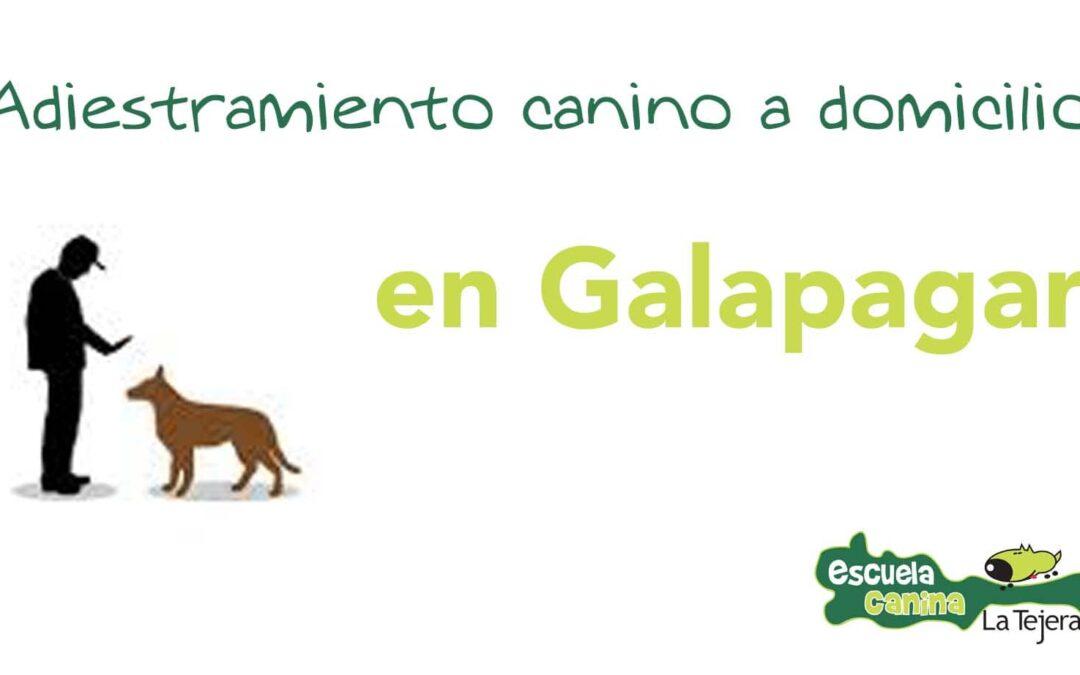 Adiestramiento canino a domicilio en Galapagar