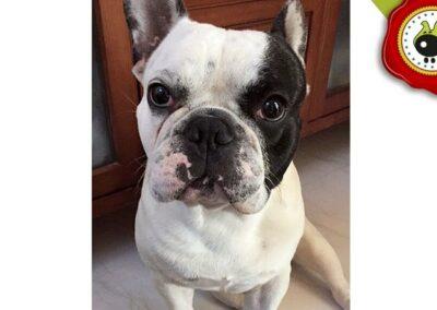 Popeye. uno de los graduados en el curso de obediencia canina de la escuela canina La Tejera en Galapagar en diciembre de 2017