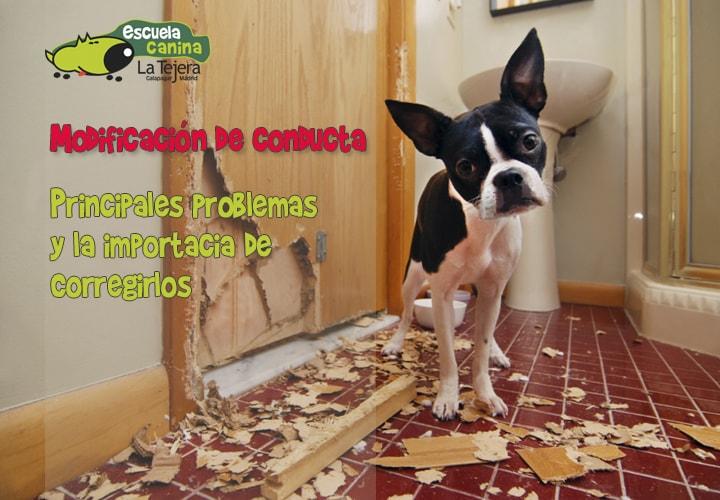 Modificación de la conducta canina, los 5 problemas más comunes de comportamiento