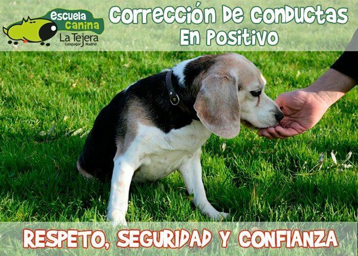 Corrección de conducta canina positiva