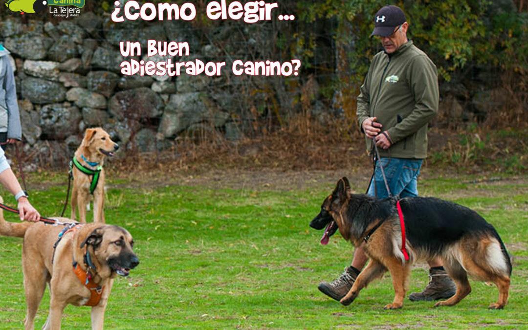 Adiestrador canino. Formas, Modos y Formación