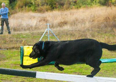 galeria-agility-1-escuela-canina-la-tejera