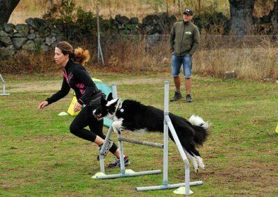 galeria-agility-2-escuela-canina-la-tejera