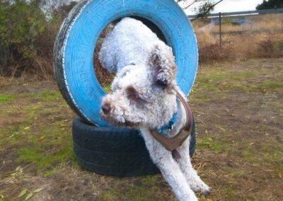 galeria-agility-5-escuela-canina-la-tejera