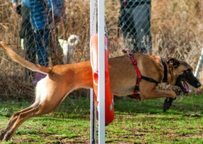 galeria-agility-6-escuela-canina-la-tejera