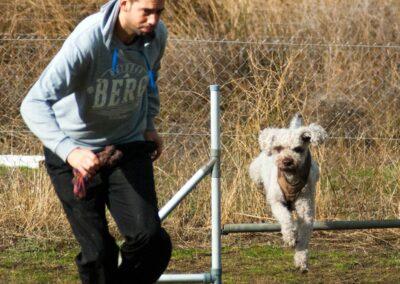 galeria-agility-7-escuela-canina-la-tejera