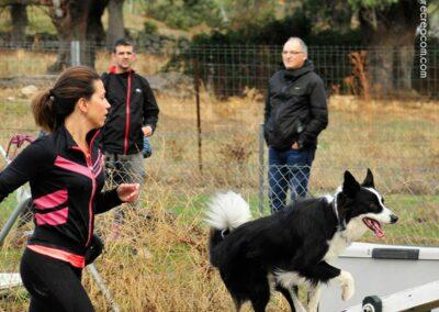 galeria-agility-8-escuela-canina-la-tejera