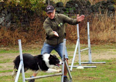 galeria-agility-9-escuela-canina-la-tejera