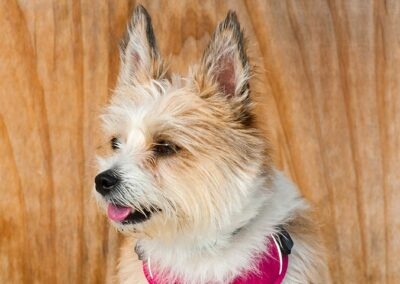 galeria-obediencia-avanzada-10-escuela-canina-la-tejera