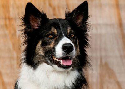 aleria-obediencia-avanzada-11-escuela-canina-la-tejera