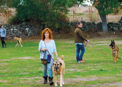 galeria-obediencia-avanzada-3-escuela-canina-la-tejera