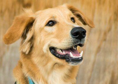 galeria-obediencia-avanzada-6-escuela-canina-la-tejera