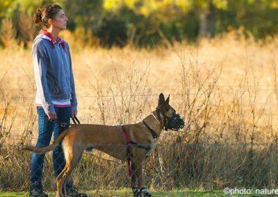 galeria-perros-detectores-escuela-canina-la-tejera