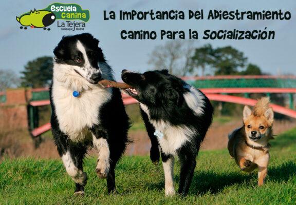 La importancia del adiestramiento canino para la socialización
