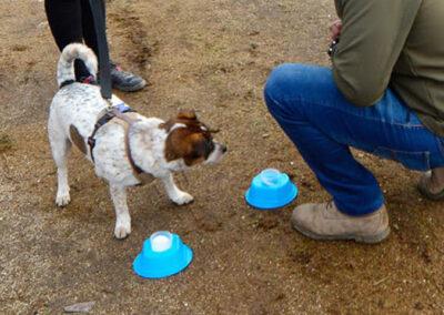 galeria-imagenes-perros-detectores-7
