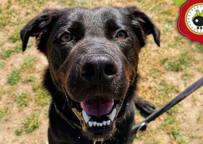 Black, graduado curso de obediencia canina básica en Escuela Canina La Tejera