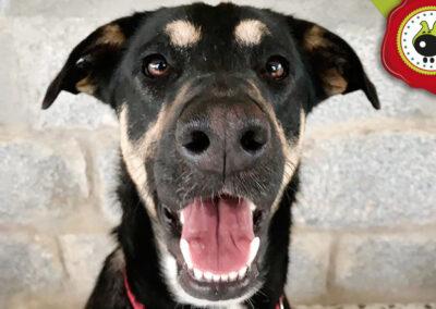 Dalton, graduado curso de obediencia canina básica en Escuela Canina La Tejera