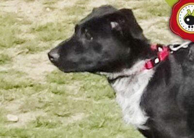 Luca, graduado curso de obediencia canina básica en Escuela Canina La Tejera