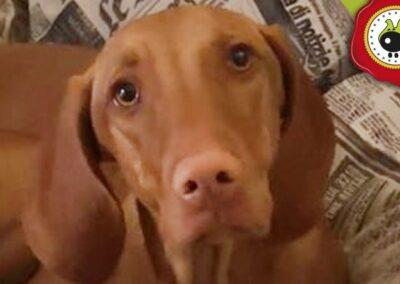 Maya, graduada curso de obediencia canina básica en Escuela Canina La Tejera