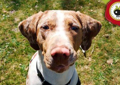 Zuri, graduado curso de obediencia canina básica en La Escuela Canina La Tejera