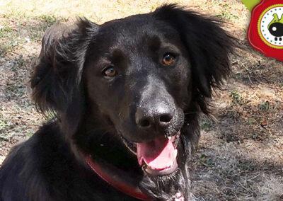 Lula, graduada curso de obediencia canina básica en La Escuela Canina La Tejera