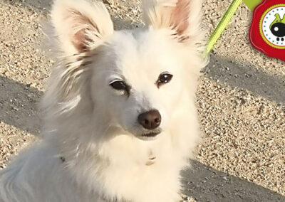 Nora, graduada curso de obediencia canina básica, Las Rozas