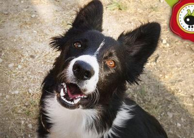 Zoe, graduado curso de obediencia canina básica, Las Rozas.