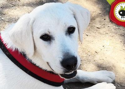 Lucky, graduado curso de obediencia canina básica en La Escuela Canina La Tejera