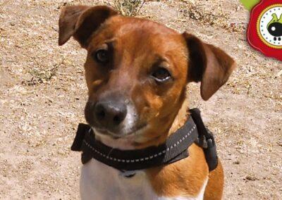 Flash, graduado curso de obediencia canina básica en La Escuela Canina La Tejera
