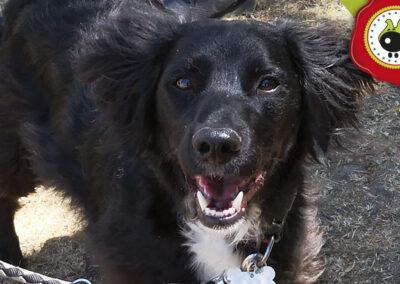 Boogie, graduado curso de obediencia canina básica en La Escuela Canina La Tejera