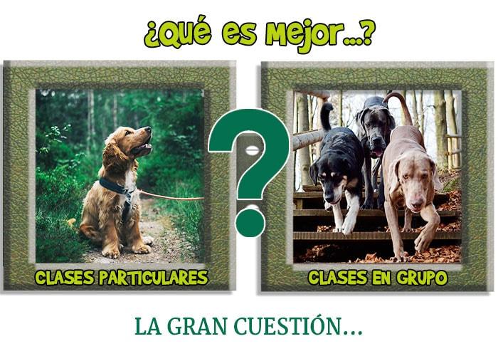 Clases en grupo o particulares para educar a tu perro ¿Qué es mejor?