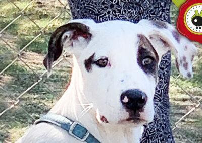 Carton, graduado curso de obediencia canina básica en La Escuela Canina La Tejera