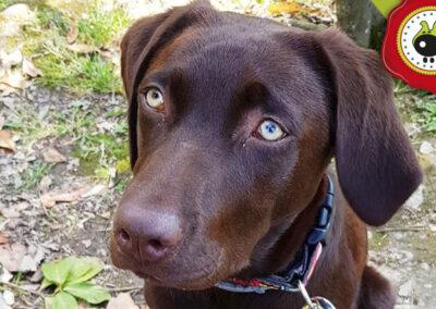 Mika, graduada curso de obediencia canina básica en La Escuela Canina La Tejera