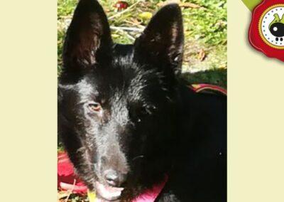 Niebla, graduada curso de obediencia canina básica en La Escuela Canina La Tejera