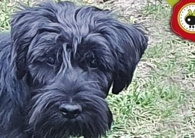 Puka, graduada curso de obediencia canina básica en La Escuela Canina La Tejera