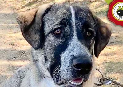 Runa, graduada curso de obediencia canina básica en La Escuela Canina La Tejera