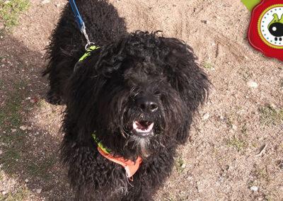 Rita, graduada curso de obediencia canina básica, Las Rozas.