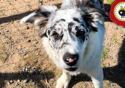 adiestramiento canino España, escuela para perros en Madrid, escuela canina online, curso para perros, adiestramiento canino Madrid, curso de adiestramientocanino presencial, escuela de adiestramiento canino, adiestramiento canino a domicilio en Madrid, adiestramiento canino a domicilio, centro de educación canina, cursos de obediencia canina, cursos de educación canina, adiestramiento canino en Madrid, escuela canina en Madrid, escuela de adiestramiento canino en madrid